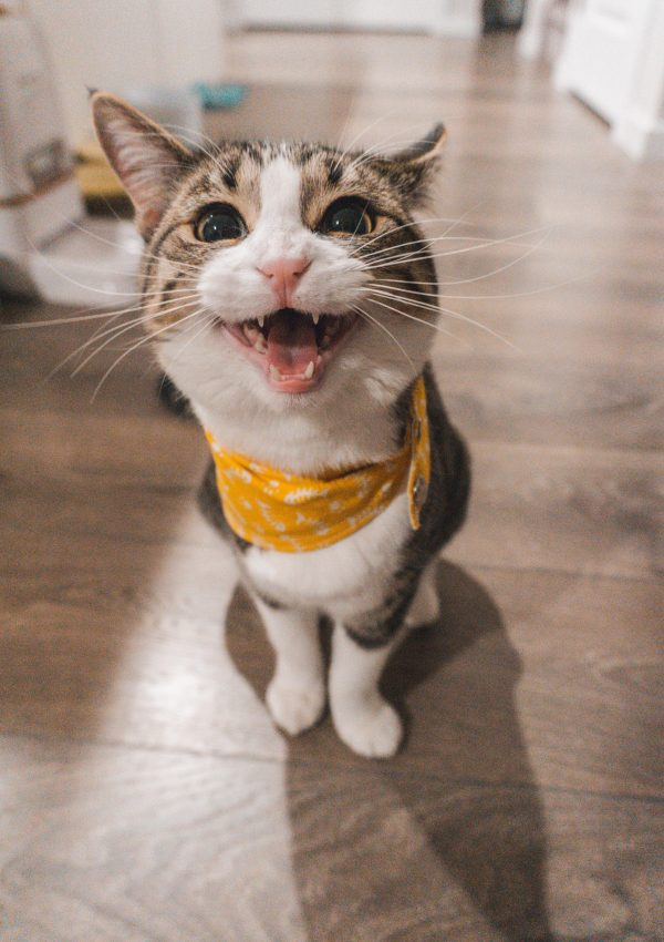Purrfect Cat Cafe, Penang – A Review