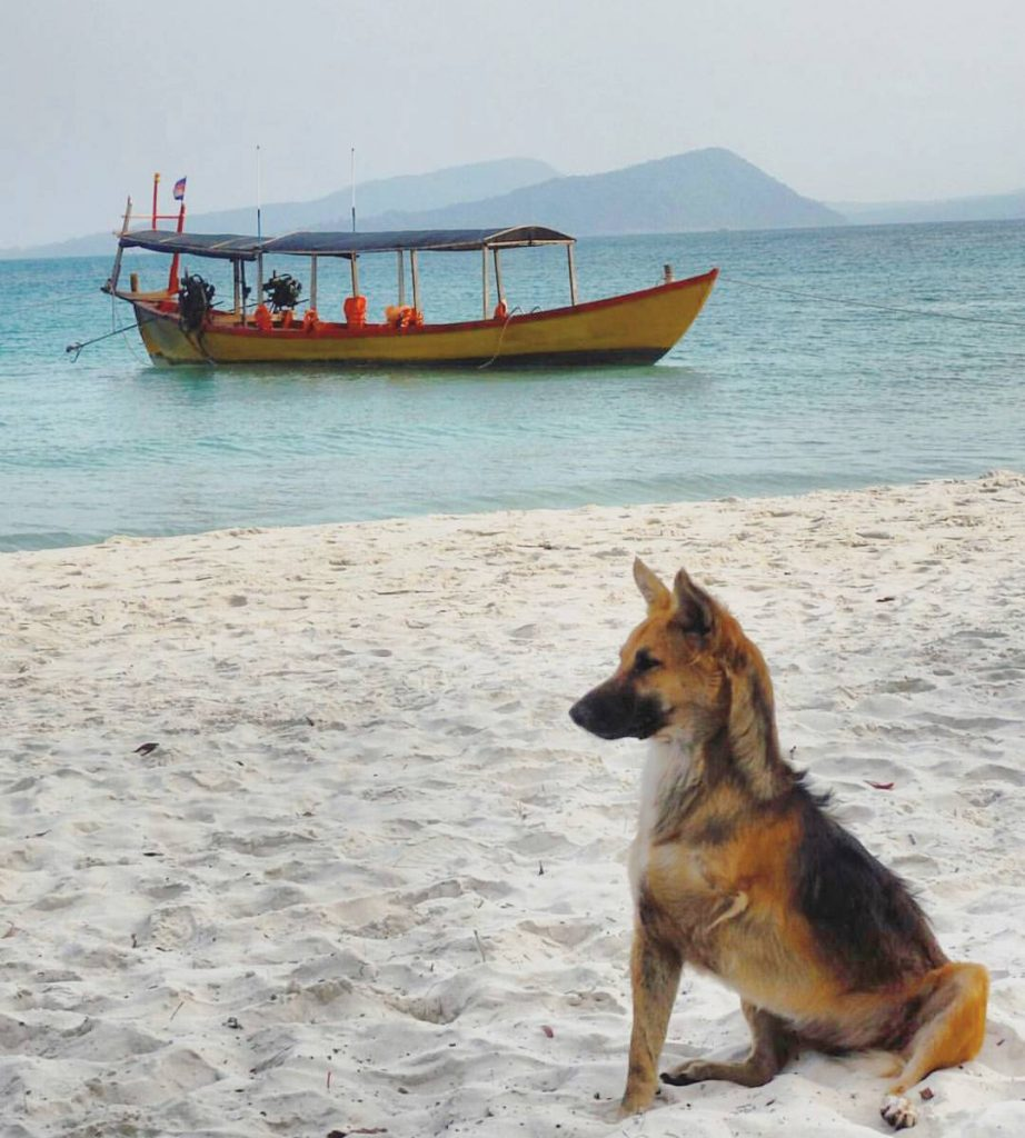 koh rong island pups in paradise