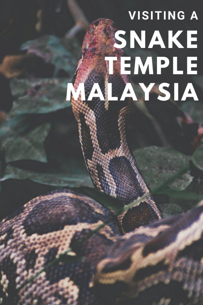 Visiting the Snake Temple in Penang, Malaysia - everything you need to know. How to get there, how much does it cost, are the snakes dangerous, how many snakes are there, what is the history of the temple? #penang #snaketemple